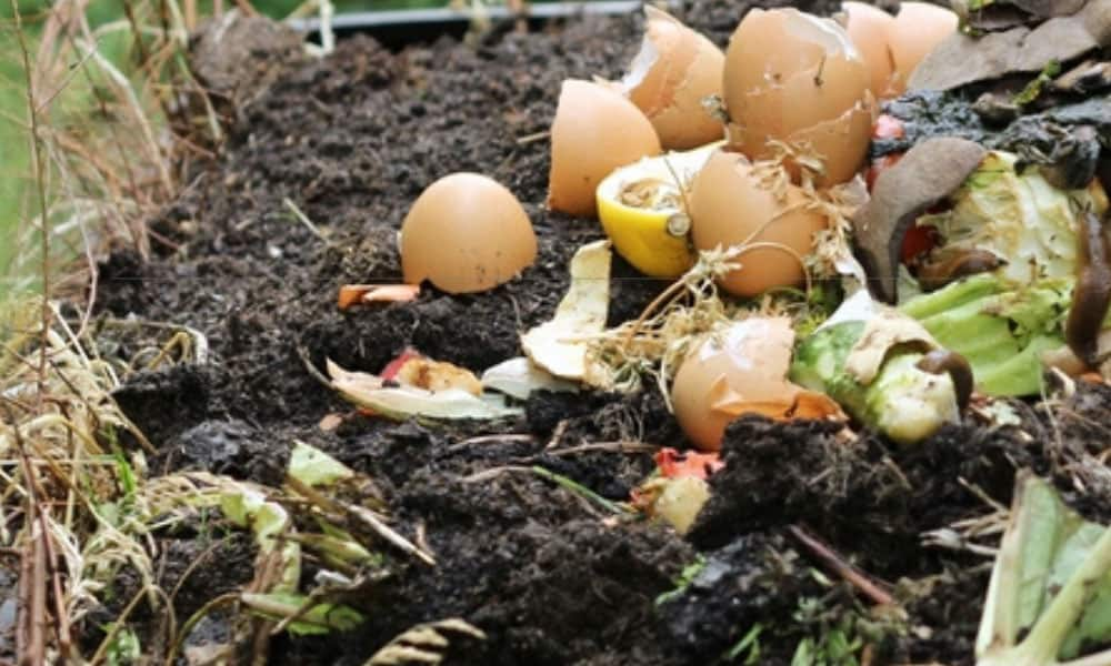 how to keep flies out of the compost